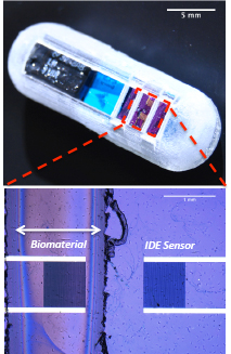 Concept illustration of an ingestible microsystem capsule for for real-time GI-tract diagnostics. CREDIT: UMD MEMS Sensors and Actuators Lab