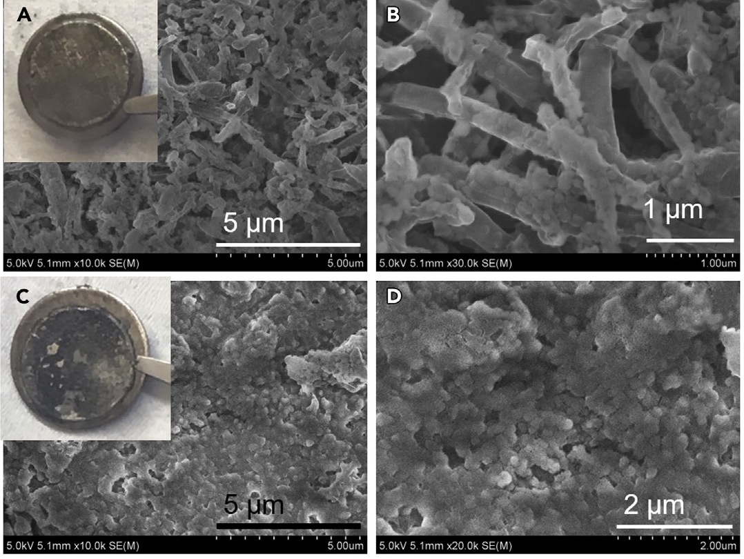 SEM images of cycled Li-metal anodes obtained from 1 M LiFSI EC/DMC (EC:DMC = 1:1) (A and B) and from 10 M LiFSI EC/DMC (C and D). Insets in (A) and (C) show the optical images of cycled Li foils on the spacers.