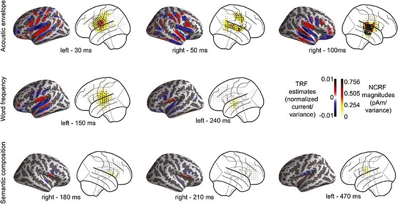 Comparison of cortical spread of estimated NCRFs against MNE-boosting TRFs. (Fig. 8 from the paper)