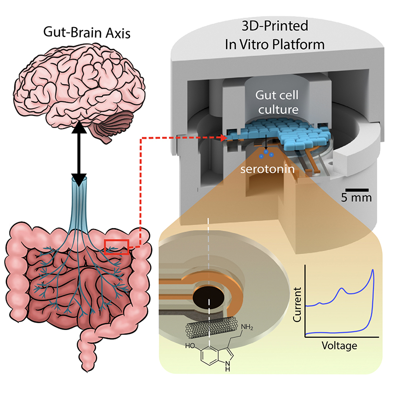 A graphical abstract of the gut-brain axis (left) and the 3D-printed in vitro platform (right).