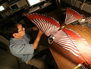 Prof. Timothy Horiuchi works on micro-air vehicle research.