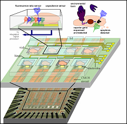 Diagram showing monitoring cells on chip.