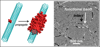 "Left: The Billups-Birch alkylcarboxylation reaction allows functional groups to propagate down the CNT from points of pre-existing defects. Right: Electron microscopy shows ""banded"" CNTs with distinct functionalized and intact regions along their lengths. Photo credits: Nature Communications."