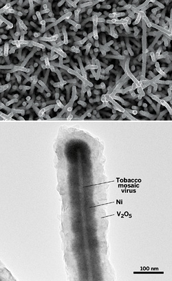 A microbattery cathode material prepared by depositing a composite of nickel and V2O5 as core and shell (dark inner and light outer regions) over a tobacco mosaic virus template. Top: SEM image; Bottom: TEM image. Photo credit: Ekaterina Pomerantseva, University of Maryland.