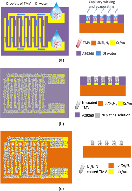 The formation of microfluidic channels in the photoresist layer allows a suspension of TMV particles to be drawn through by capillary action. As the water evaporates, the virus particles self-assemble on the electrodes (a). Nickel-coating the virus particles (b), removing the photoresist, and annealing at 300 °C, leaves a porous, high-surface-area electrode standing above the substrate (c). Courtesy Nanotechnology.