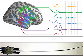 """Top: Temporal response functions to natural speech vary across the brain (right hemisphere shown), with areas in the auditory cortex responding both quickly and repeatedly (last four temporal response functions), and areas outside of auditory cortex also responding but with a longer latency than auditory areas (first twotemporal response functions). Credit: Christian Brodbeck, postdoctoral researcher, Institute for Systems Research, University of Maryland. From the """"Neural source dynamics of brain responses to continuous stimuli with MEG: speech processing from acoustics to comprehension"""" presentation delivered at the Eighth International Workshop on Statistical Analysis of Neuronal Data (SAND8), May 31-June 2, 2017, University of Pittsburgh. Bottom: Animal whiskers are the inspiration for the development of novel sensors that use artificial whiskers made of advanced, custom-designed materials. The whiskers can sense object location, shape, and texture, to track fluid wakes in water, and to sense the direction of airflow. Credit: Bergbreiter laboratory, University of Maryland"""