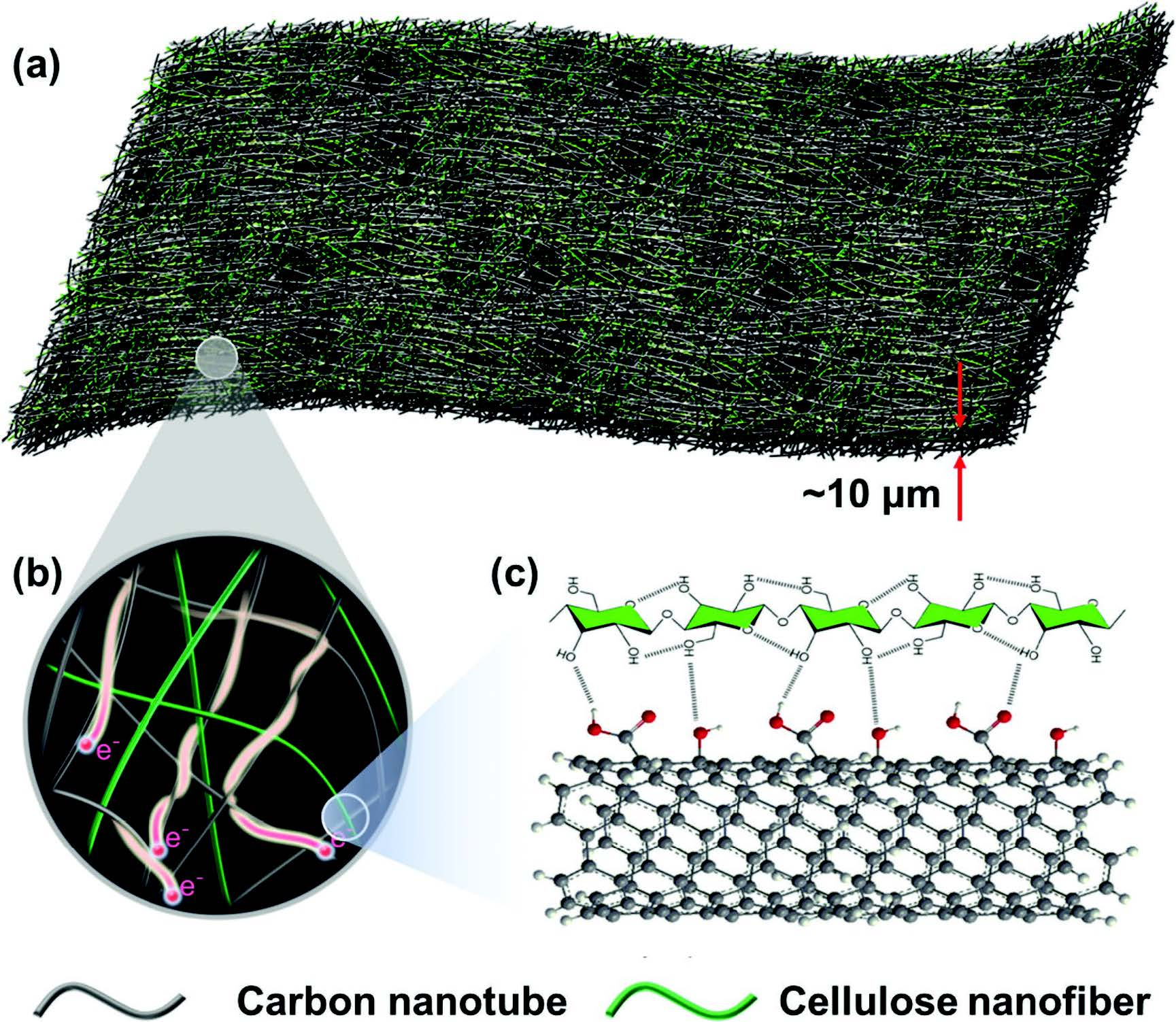 a) Schematic illustrations of the carbon nanotube (CNT)–cellulose nanofiber (CNF), all-fiber based current collectors, where b) CNT provides current pathway and CNF acts as backbone to enable the strength. c) Association exists between CNF and CNT, which enables the stability of CNT in CNF aqueous dispersion and the promising mechanical strength of CNT–CNF film.