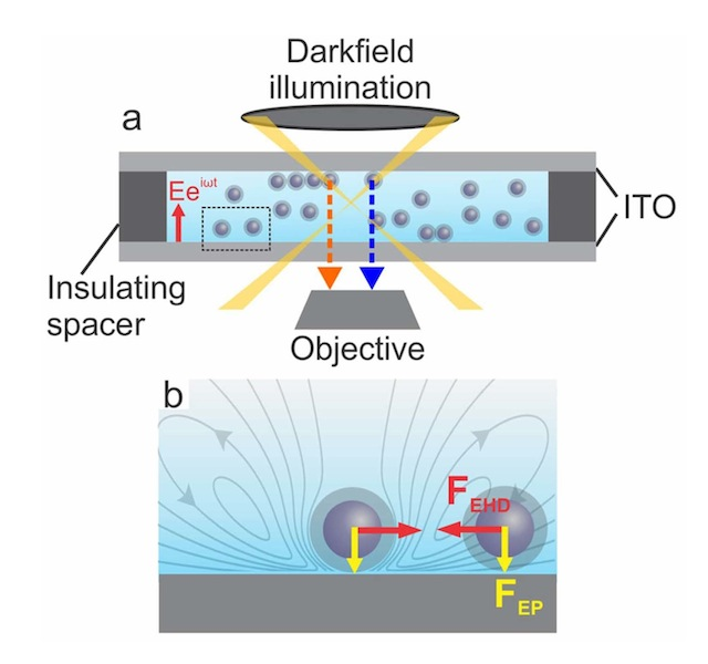 Image (not to scale): Schematic of sample cell and dark field optical microscopy for visualizing AC electric field induced NP assembly.
