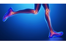 Runners' shin bones endure heavier loads when athletes dawdle than when they hightail it, new research shows.(Illustration by iStock)