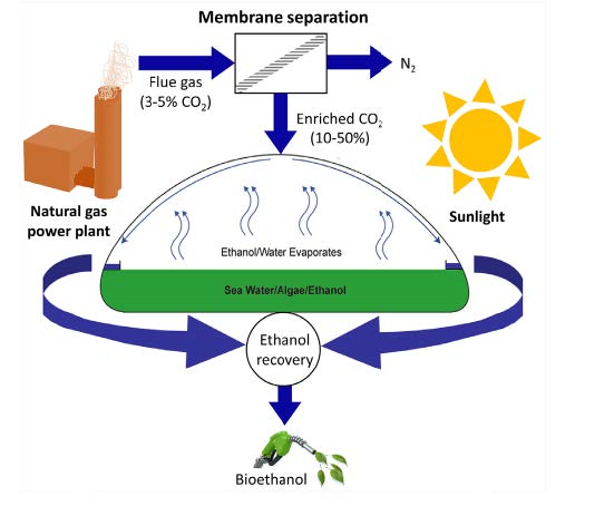 Schematic illustrating algae-based bioethanol production using CO2 sources enriched by membrane separation (www.algenol.com/)