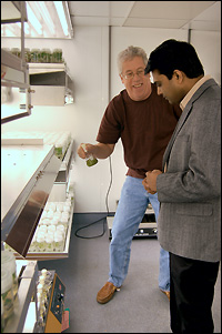 Professor Gary Coleman (left) shows a poplar sample to Assistant Professor Ganesh Sriram (right).