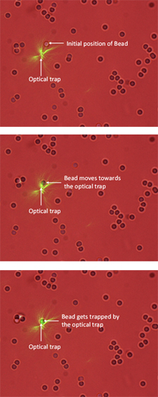 When an optical trap is placed close to a microparticle, it pulls the particle towards the focal point. The images above captured using the imaging device in the optical tweezers system show a microparticle moving into a trap.