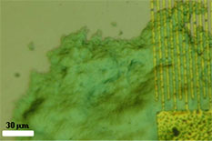 Biofilm on the sensor. (Y.W. Kim et al., Sens. Actuat. B-Chem, 2012)
