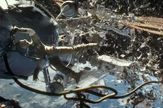 Space junk are piling and if not limited could reach a tipping point. (Photo Warner Bros.)